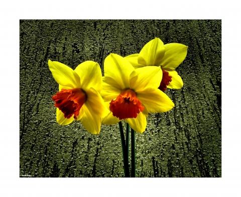 giallo bello.jpg
